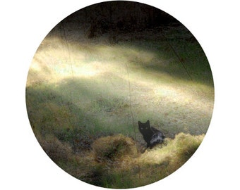 Black Cat Photograph, Animal Photography, Halloween, Kitty, Grey, Brown, Surreal, Circle, Round Image - 5x5 inch Print - Bewitched Circle