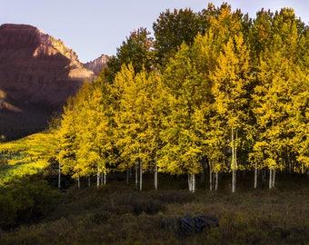 Aspen Trees, Colorado art, rustic home decor, fall art, cabin decor, log home decor, livingroom landscape art, nature wall art | Last Light