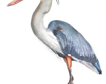 Large watercolor print bird art  Blue Heron by Betty Moore
