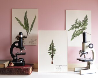 Fern botanical illustration - Botanical print set - Fern print - Floral art