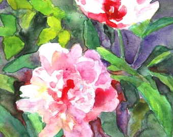Pink Peony Garden Flower Painting Original Matted Watercolor French Country Impressionist Wall Art Unique Gift By Kim Stenberg