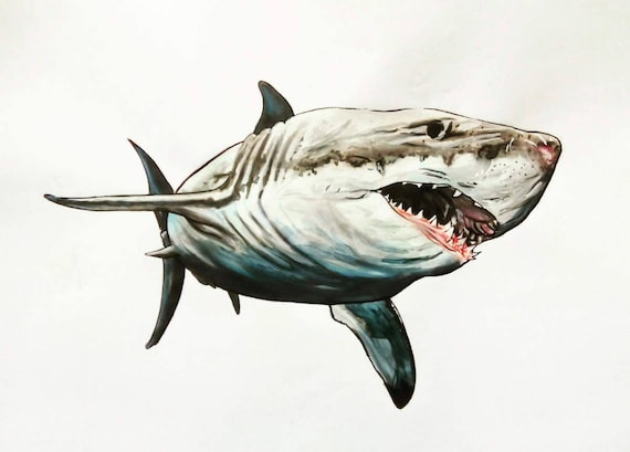 Grand requin blanc dessin aux feutres plus encre papier a3 - Dessin de grand requin blanc ...