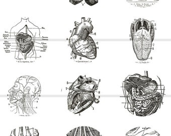 """1"""" Inch Medical Anatomy Illustration Pins, Flatback Buttons, or Magnets 12 Ct. Set B"""
