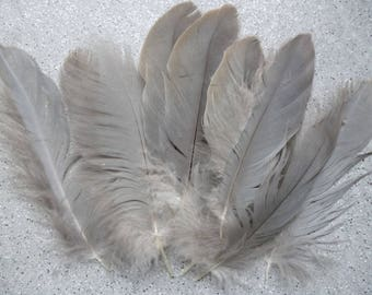 10 feathers natural natural 14 cm and more.