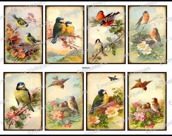 8 Vintage Grunge Victorian Birds Collage Sheet ATC ACEO / Vintage Birds Digital Collage Sheet Tags Images—Printable Ephemera