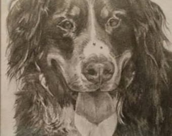 Beautifully drawn pencil portrait of your pet.