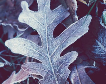 Blue Frost- Fine Art Photography print 5x7 by Alana Gillett- Winter Ice Leaves Indigo Amethyst Navy Wall Art Home Decor