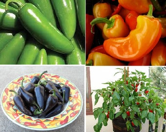 Jalapeno-Hot chilli (4 variety)