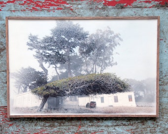 Tomales Point wind swept cypress tree. Original Encaustic Photography. Point Reyes, California. Wall decor. Fog. Rustic frame. 11x17