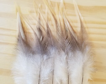 Chicken Feathers Cruelty Free Humane Naturally Molted Real Feathers #c60