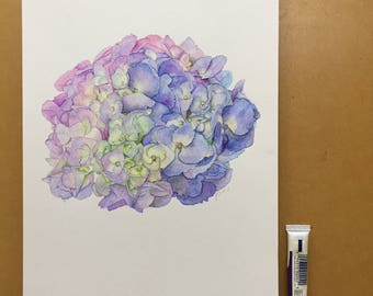 Hydrangea Original Watercolour Illustration A4