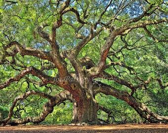 Angel Oak, Johns Island, Charleston, South Carolina, home decor, photo art, majestic trees, wall art, archival print, by Joe Parskey