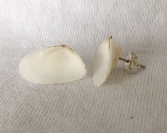 Sustainably collected white Coquina shell earrings