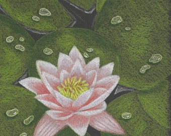 Lily Pads Pattern in colored pencil