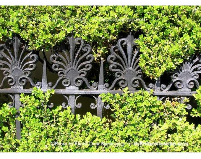 Ironwork in Hedge Photograph - New Orleans