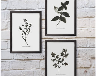 Set of 3 Culinary Herbs Basil Thyme Parsley Minimal Black and White Kitchen Print Wall Art Ink Simple Sketch Illustration Free shipping UK