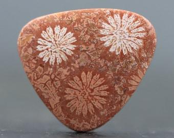Fossilized Coral Gemstone (V3484)