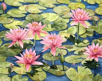 Pink Waterlily Garden