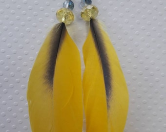 Blue and Yellow Natural Parrot Feather Earrings