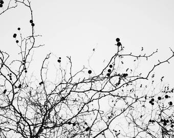 Black and White Tree Photography, Abstract Monochrome Print, Nature Patterns, Nature Fine Art Photograph