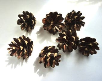 Set of 10 small pinecones for decoration