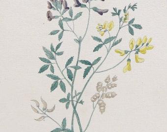 1800's Original Botanical Watercolor - Meoioago Fatira #105 by K. G. A. Winkler