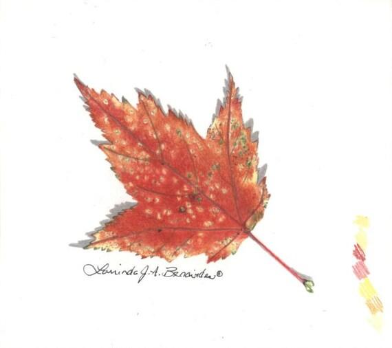 feuille drable dessin automne automne itsy impression srie 4 x 4 crayons de couleur photo raliste art illustration imprimer sur 80 livres d - Dessin De Feuille