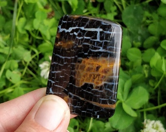 Rectangular Petrified Colorado Wood Cabochon