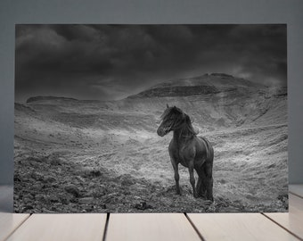 Icelandic Horse Print | Black and White | Black Horse | Iceland | Mountains | Horse Photography | Equine Fine Art Print | Wall art