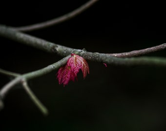 First Spring Leaves