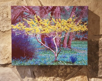 Photo Canvas - Redbud Tree - Fantasy in Yellow #2