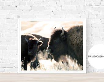 Bison Print, Animal Photography, Buffalo Print, Bison Wall Art, Bison Decor, Bison Poster, Digital Download, Buffalo Print, Bison Photo