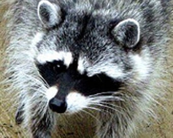 Realistic raccoon mask, adult raccoon eye mask with fur