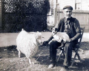 vintage photo 1914 Man Sits in Chair w Terrier Dog & Peg Sheep RPPC