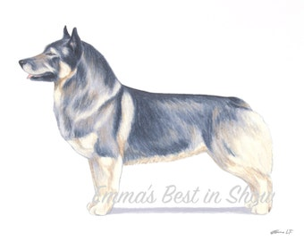 Swedish Vallhund Dog - Archival Quality Fine Art Print - AKC Best in Show Champion - Breed Standard - Herding Group - Original Art Print