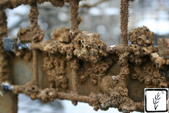 """""""Rusty Barnacles,"""" Cow Harbor, Northport, New York, 2015."""