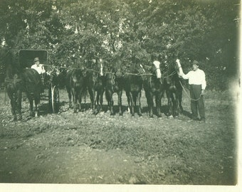 Antique Horses in a Row With Carriage RPPC Real Photo Postcard Photograph Black White Photo