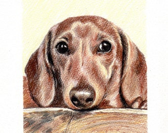 Custom Dog Pet Portrait Colored Pencil 5x7