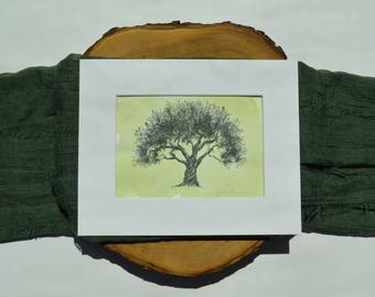 Olive Tree Ink Drawing with Green Watercolor Wash - Fine Art Print by Heather L. Young