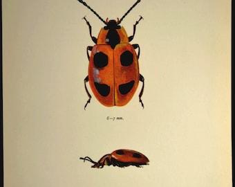 Insect Wall Decor Beetle Print Bug Decor Art Nature Vintage