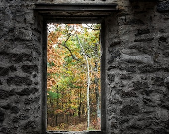 Autumn within Cunningham Tower, Looking out of the ruins, Autumn color, Gothic Architecture, Free Shipping