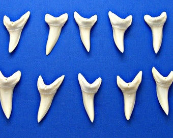"10 Pc 2"" MAKO Sharks Teeth 2 Inch 51mm White Shark Jaw Tooth FREE S&H"