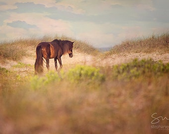 Wild Horse Photography, Wild Horse on Shackleford Banks North Carolina stands on the beach
