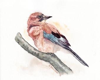 Watercolour birds portraits series.