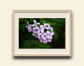 Purple lilac print, lilac photo print, lilac flower print, nursery wall art, nursery decor, purple lilac flower, purple lilacs decor, floral