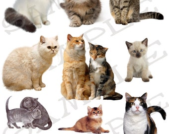 Cats and Kittens 2 Jpeg and PNG images