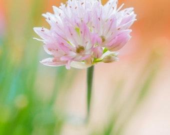 Pink Blossom, Macro Photography, digital download