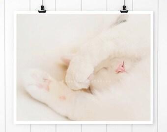 White Cat Photo, Sleeping cat print Cat Nose Photo, Kitten Print, White Cat Print, cute kitten, kitty, wall art, cat art, nursery decor