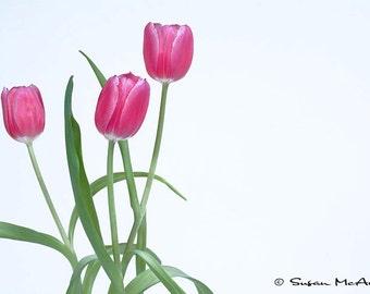 Perfection, Pink Tulips with Green Stems on White Background Color Photograph Home Decor, Office Decor, Wall Art, Nature Photography