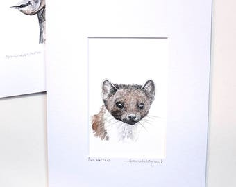 Print - Pine Marten - Pencil and Watercolour Drawing